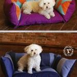 IJ994CR Pieced Pet Pillows